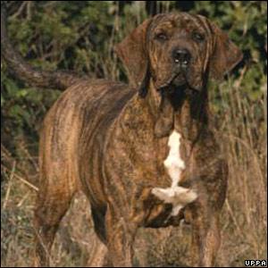 Mastiff? Mastiff? or Mastiff? | Sara Morris' Weblog